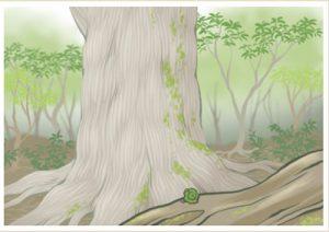 屋久杉の縄文杉